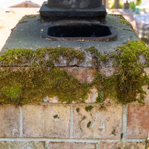 Moss Growing on a Chimney